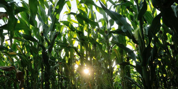 Les Etats-Unis restent largement en tête des pays producteurs d'OGM, avec 73,1 millions d'hectares dédiés à ce type de plantations.