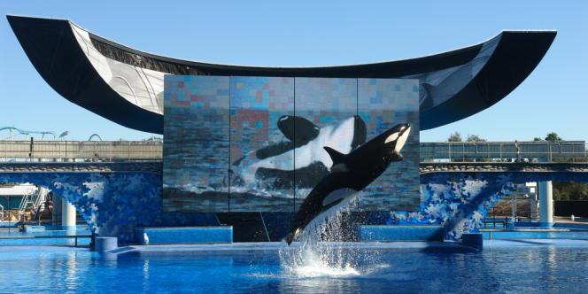 La proposition de loi prévoit d'interdire les spectacles dans lesquels apparaissent des orques.