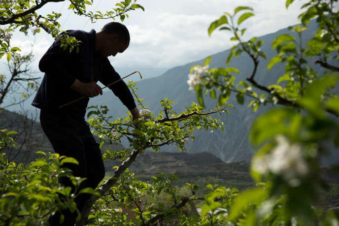 Par ailleurs, dans les champs, les cultivateurs utilisent largement les produits phytosanitaires pour éliminer les insectes qui menacent leurs fruits.