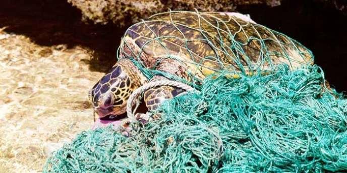 Une tortue prise au piège dans un filet de pêche.