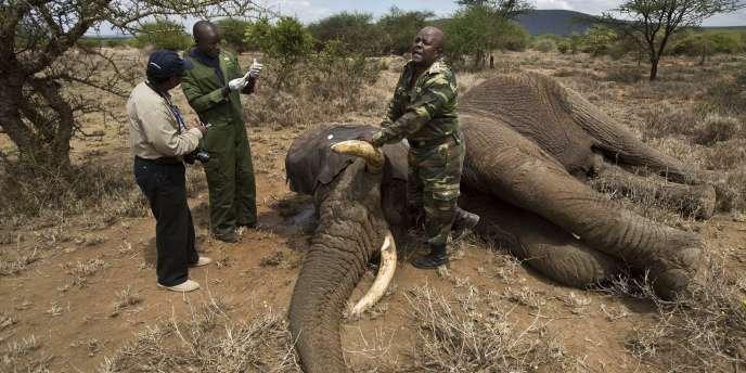 Selon la Société de protection des éléphants de Tanzanie, une trentaine de pachydermes sont tués chaque jour dans le pays par des braconniers.