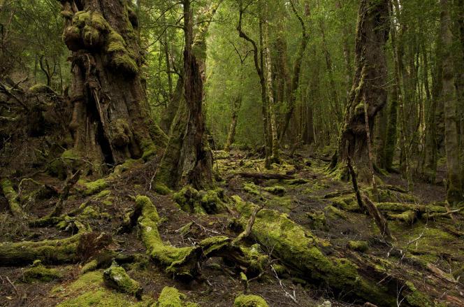 La haute vallée de la Florentine, dans le sud-ouest de la Tasmanie.