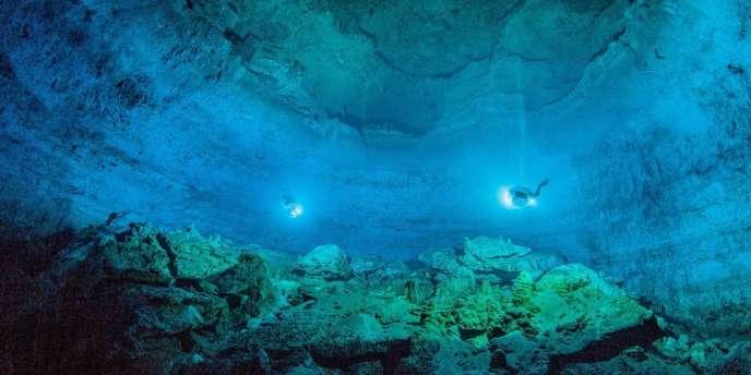 Les experts du Registre mondial des espèces marines ont recensé au total 228 450 espèces dans les mers du globe, des algues aux baleines bleues.