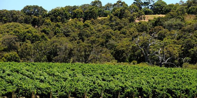 Des vignes dans le sud-ouest de l'Australie, en décembre 2009.