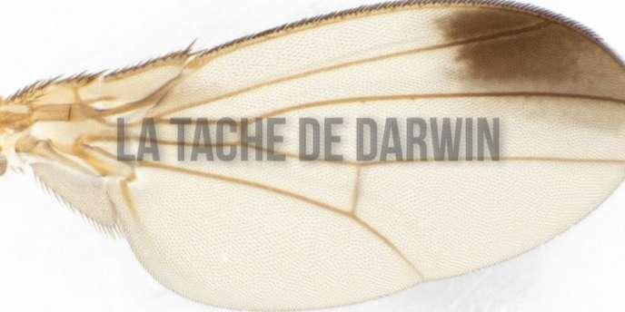 Page-titre du web-book La Tache de Darwin.