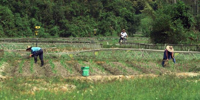 Cette mode du bio gagne aussi la Chine. Pourtant, peut-on parler d'agriculture biologique quand la majorité des terres cultivées est polluée ?
