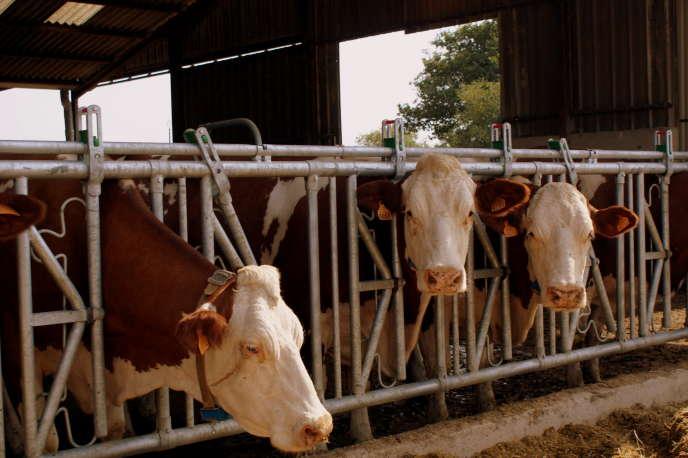 La ferme des mille vaches est en rupture totale avec le modèle d'élevage familial.