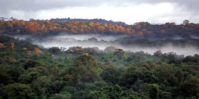 Forêt guyanaise dans les environs du village de Saül.