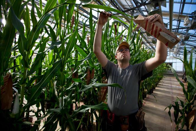 L'accord européen prend acte de l'impossibilité de tenir une discussion raisonnable sur les OGM. L'Europe renvoie chaque Etat membre à ses propres tropismes, qu'ils soient fondés sur la connaissance scientifique, ou sur autre chose.
