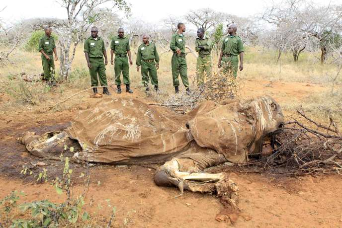 Une carcasse d'éléphant dans la réserve naturelle de Tsavo, au Kenya, le 19 juin.