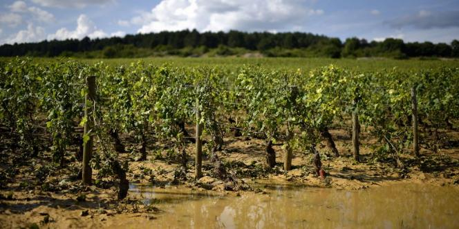 Les vignobles de la côte de Beaune (ici près de Pommard) ont été touchés par des orages de grêle pour la troisième année consécutive.