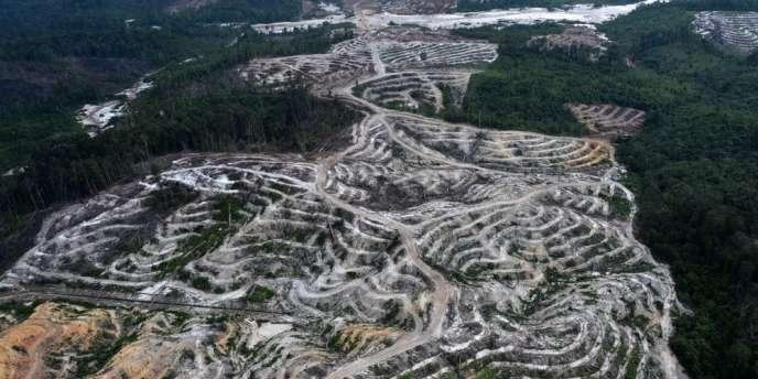 Une colline de l'île de Bornéo, en Indonésie, dont tous les arbres ont été abattus pour y installer des plantations d'huile de palme.