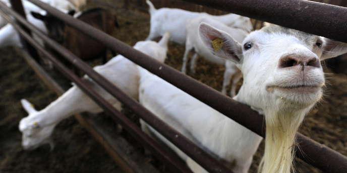 Les fermiers biologiques, qui louaient jusqu'à présent entre 300 et 500 euros par hectare, ne peuvent plus suivre.