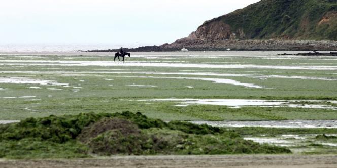 Sur la plage de Saint-Michel-en-Grève, couverte d'algues vertes, en 2011.