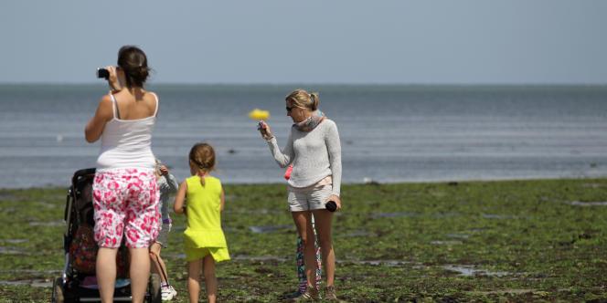 La plage de Grandcamp-Maisy (Calvados) est touchée par le phénomène des algues vertes.