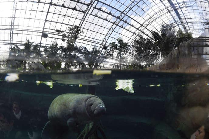 Barry, un lamantin âgé de trois ans, est mort accidentellement au zoo de Vincennes.