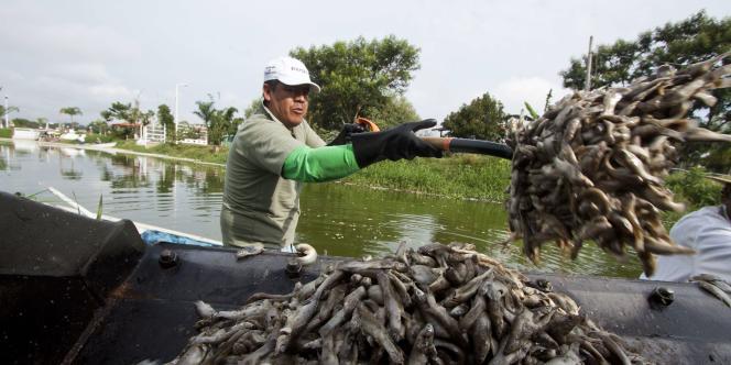 48 tonnes de poissons morts dans un lac au Mexique.
