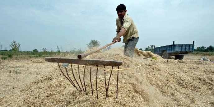 Les rendements agricoles indiens baissent du fait de la pollution à l'ozone.
