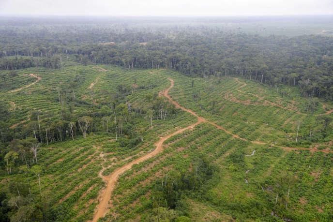 Champs d'huile de palme au Gabon, en mai 2014.