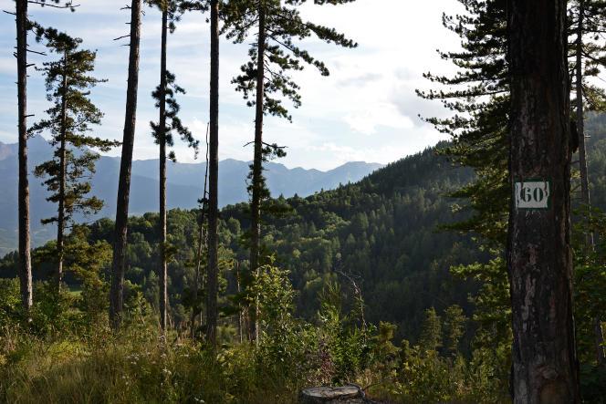 Forêt publique gérée par l'Office national des forêts dans les montagnes des Hautes-Alpes, près d'Embrun.
