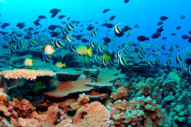 Les fonds marins près d'Hawai, dans l'océan Pacifique.