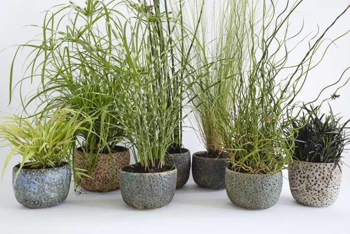 Les graminées sont plantées dans des cache-pots Meteor Planters de la céramiste américaine Pilar Wiley.