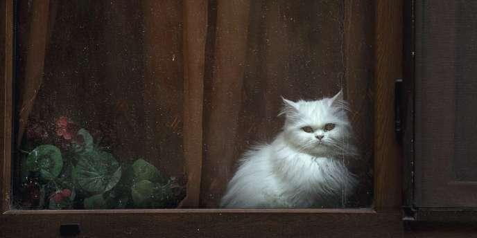 La Suisse s'inquiète de la prolifération de chats domestiques.