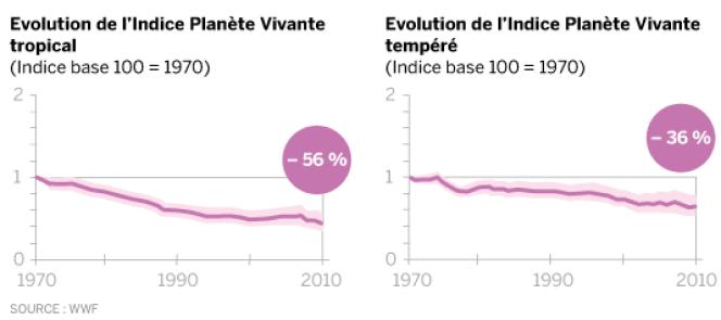 Le déclin de la biodiversité touche davantage les tropiques (– 56 %) que les zones tempérées (– 36 %).