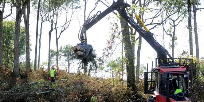 Opération de déforestation sur le site du projet de barrage de Sivens, dans le Tarn, le 9 septembre 2014.