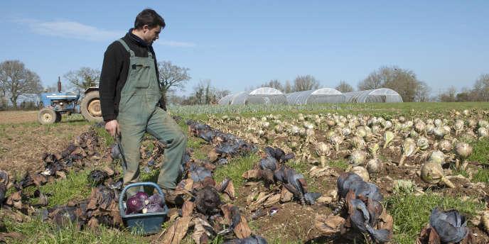 Une exploitation agricole en Loire-Atlantique.