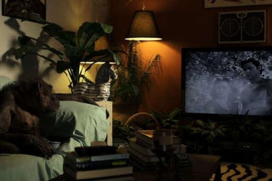 """""""See No Evil"""", de Jos de Putter, ou le quotidien de trois chimpanzés d'exception."""
