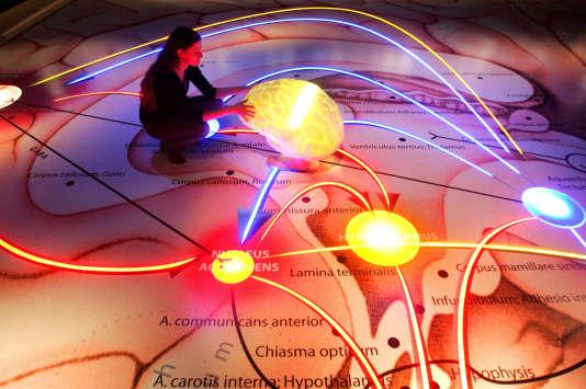 Exposition dans la «salle des neurones»du musée de l'Hygiène à Dresde (Allemagne). En Amérique du Nord, les candidats au bac ont notamment planché en SVT sur le sujet «Neurone et fibre musculaire : la communication nerveuse». AFP PHOTO DDP/NORBERT MILLAUER GERMANY OUT