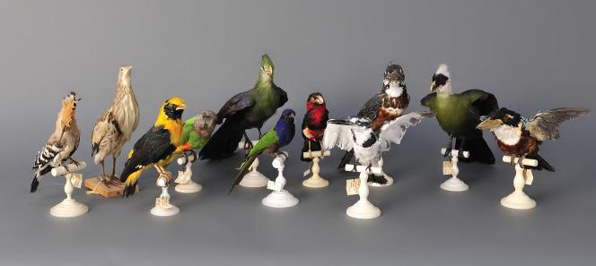 Les animaux naturalisés, surtout s'ils sont de grande taille ou colorés, ou mieux encore les deux, s'arrachent dans les ventes aux enchères.