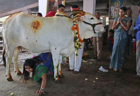 Une fidèle hindoue durant le Gopashtami, fête de l'adoration des vaches, à Hyderabad, le 31octobre2014.