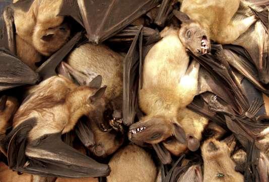 Les surfaces lisses et verticales sont des« pièges sensoriels» pour les chauves-souris selon les deux biologistes auteurs de l'étude.