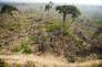 «Le Brésil accélère de nouveau le rythme de déforestation de l'Amazonie» (Photo: forêt dans l'Etat de Para, au nord du Brésil).