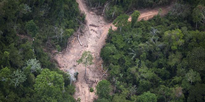 La forêt amazonienne est malade, et c'est l'une des plus mauvaises nouvelles apportées par la science, ces dernières années, sur le front climatique.