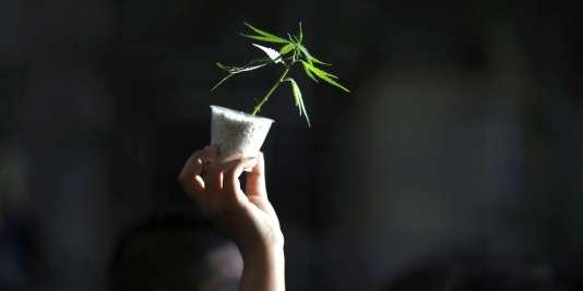 Une femme brandit un plan de cannabis lors d'une manifesation à Buenos Aires.