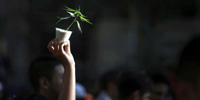 Un plant de cannabis exhibé lors d'une marche pour la légalisation à Buenos Aires, en décembre 2014.