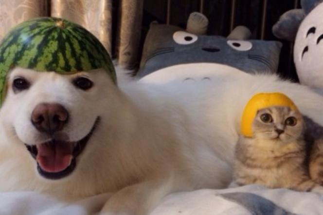 Le chien coiffé d'une pastèque, parmi le top 2014 de Tumblr.