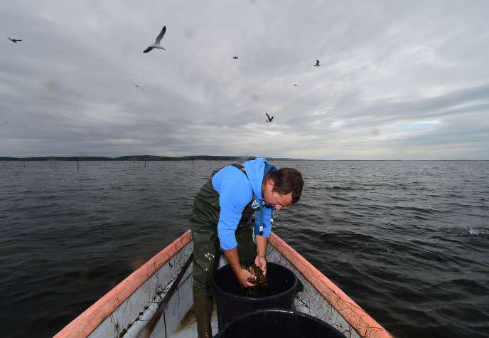Un pêcheur près de Gruissan, dans l'Aude, le 30 septembre.