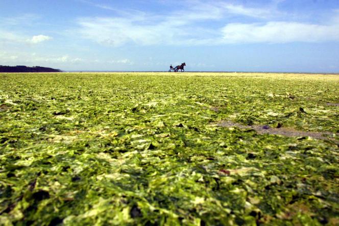 Marée verte dans les Côtes-d'Armor en 2002.