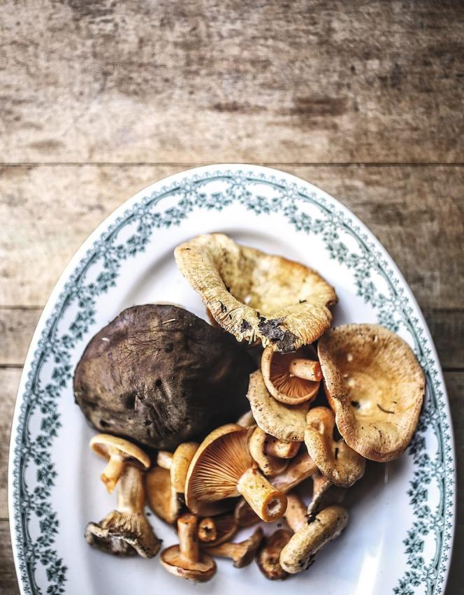 Le chef Normand Laprise a été le premier, il y a vingt ans, à élaborer une cuisine de marché. Ces champignons ont été cueillis dans les bois de Gaspésie pour Société-Orignal, une entreprise qui développe les produits régionaux.