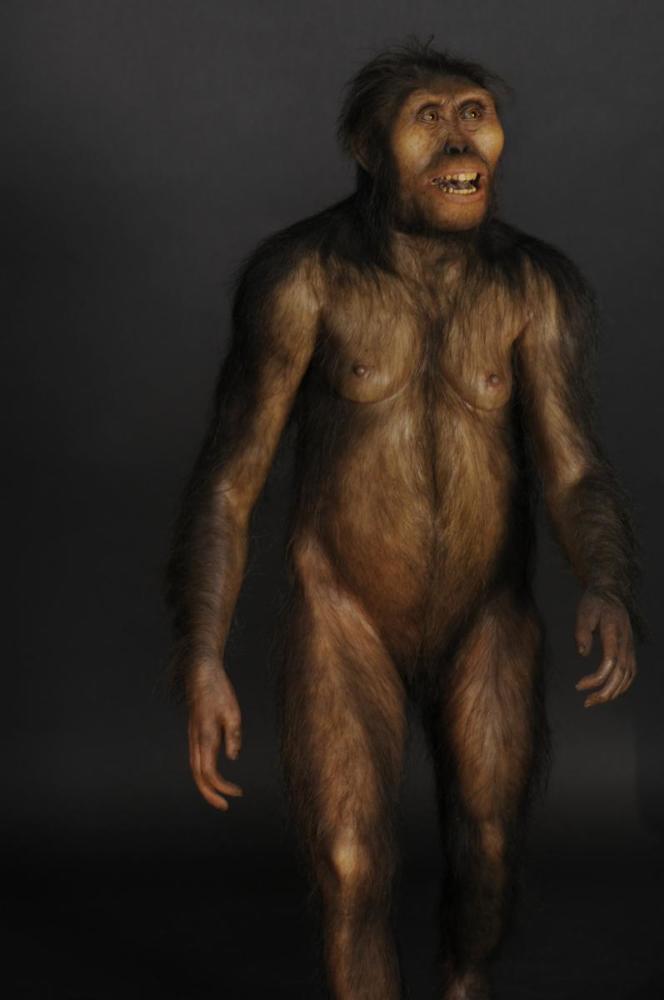 Reconstitution d'un Australopithecus afarensis femelle, connue sous le nom de Lucy. Elle vivait il y a 3,4 millions d'annees. D'après le moulage du crane AL 417 decouvert a Hadar en Ethiopie.