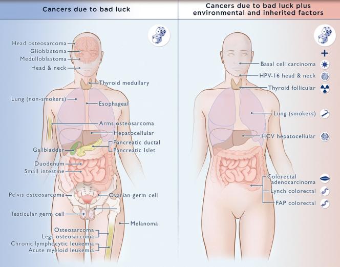 Présentation des cancers dus au