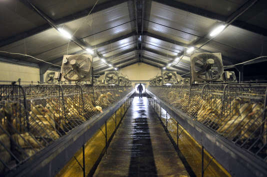 Une usine de production de foie gras, à Saint-Michel, dans l'est de la France, en2013.