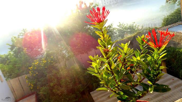 La végétalisation de son appartement peut passer par la location mensuelle de plantes d'intérieur ou d'extérieur.