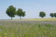 Champ de blé LU'Harmony, dans l'Oise.