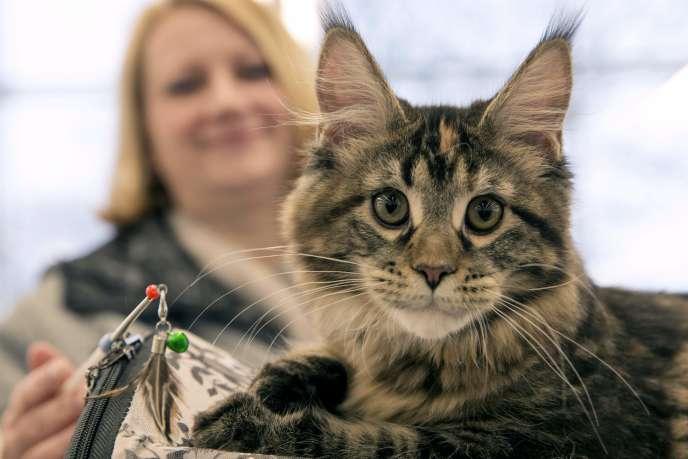 Les animaux sont désormais officiellement « doués de sensibilité ».