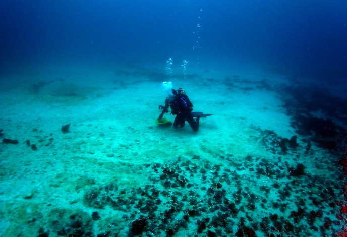 Un plongeur examine une portion de la Grande Barrière heurtée par un navire chinois, en avril2010.